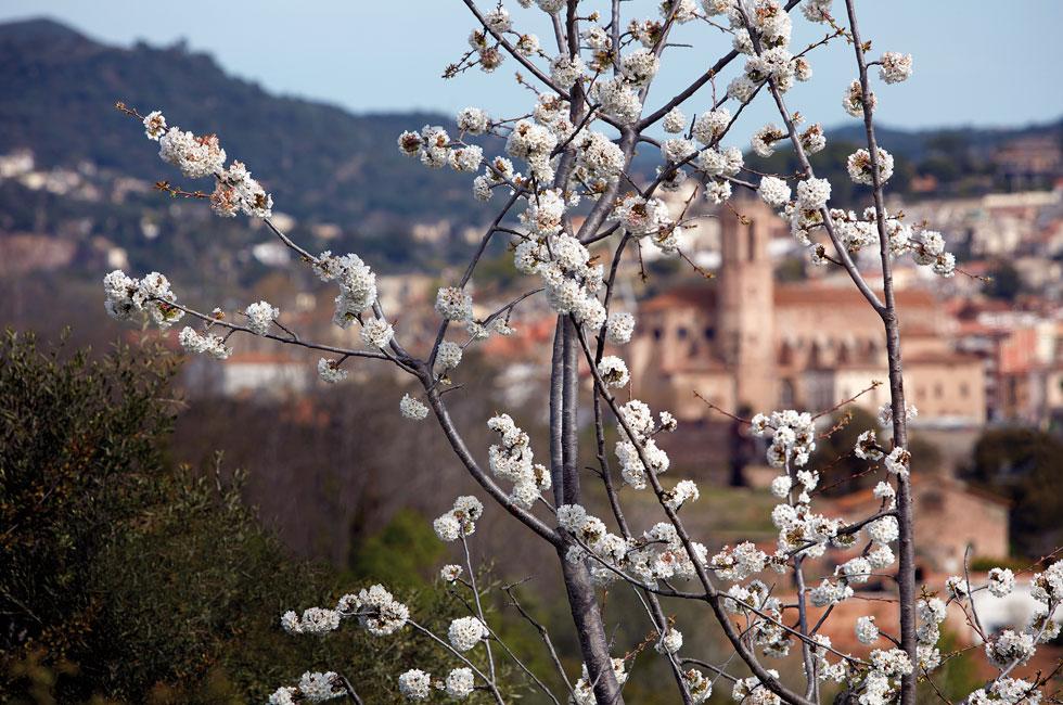 Al·lèrgies primaverals